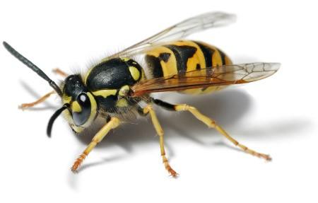 Cómo tratar a un insecto que se cuela en el coche