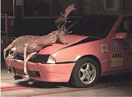 Prueba de choque contra un ciervo