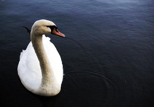 Supervivientes, o el canto del cisne que desafina