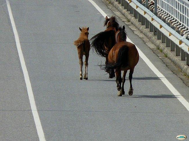 Volvo presenta un sistema para evitar atropellos a animales