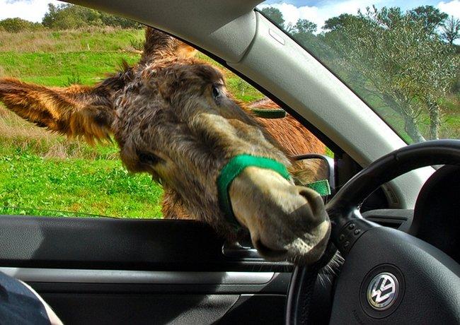 OK, let me drive... por F H Mira