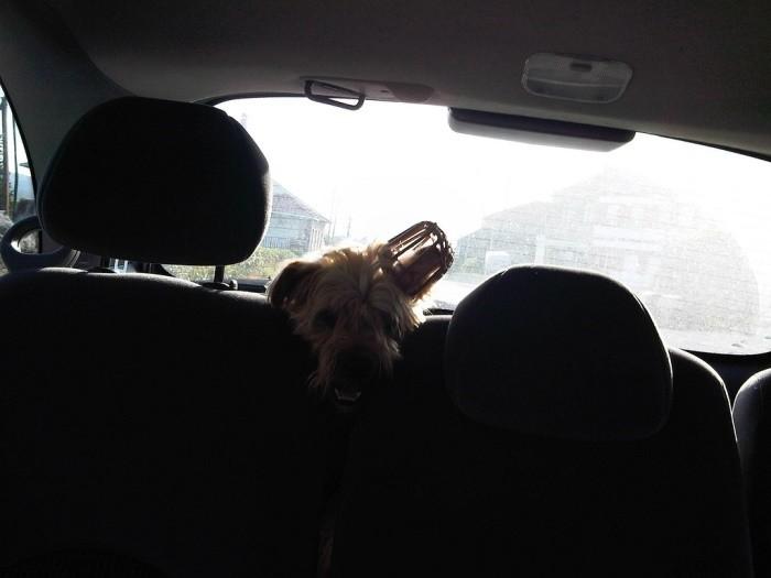 Te interesa si llevas mascota a bordo: su seguridad depende de ti