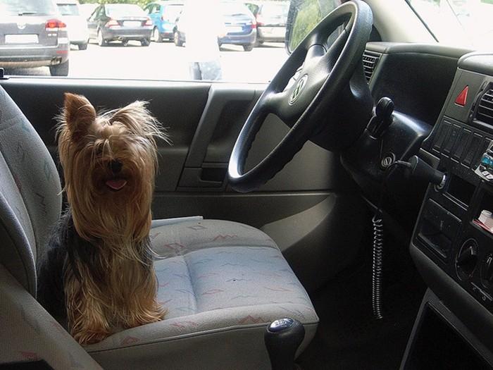 Tres sistemas de retención en el coche para mascotas