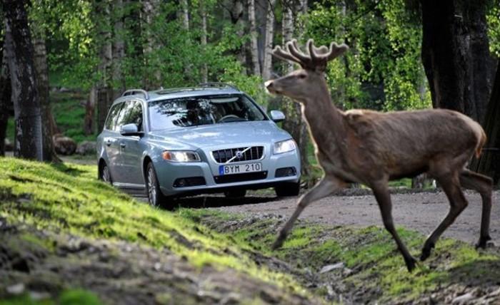 En España se producen alrededor de 14.000 accidentes de tráfico al año causados por animales