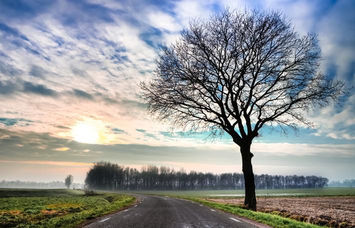 Carretera árbol