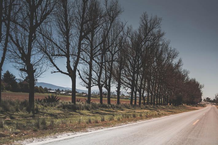 ¿Tienen los árboles junto a la carretera un efecto radar?
