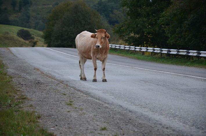 maniobra de urgencia: evitar obstáculo en carretera