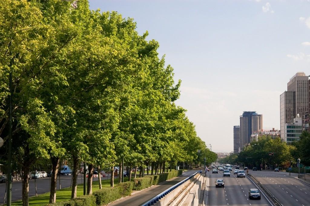 Protocolo por Contaminación: Dudas habituales que resolver antes de entrar a Madrid en coche