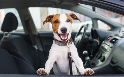 Los 6 mandamientos para llevar a tu perro en el coche de forma segura