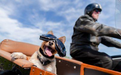 ¿Es posible llevar a mi mascota en un transportín en la bicicleta o en la moto?