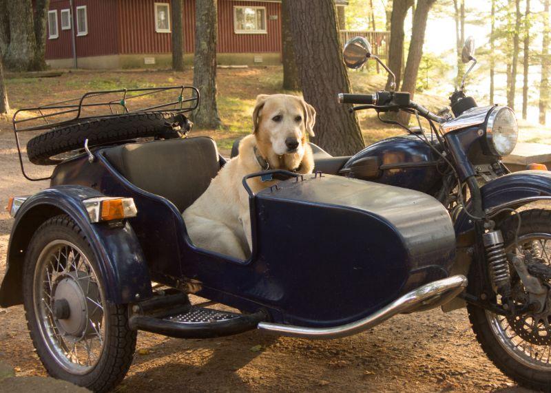 mascota en moto