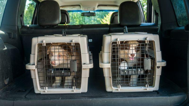 transportar perro