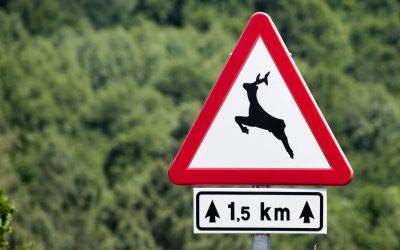 Pasos para animales: carreteras respetuosas con la fauna